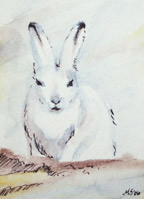SOLD - small ACEO artic bunny