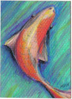 SOLD small ACEO Koi