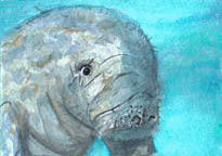 SOLD small ACEO manatee